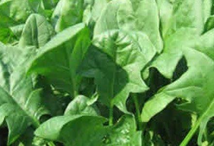 16种蔬菜帮你有效降低血糖