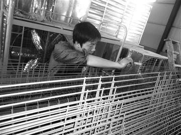 图文:大学生造出环保鸡笼